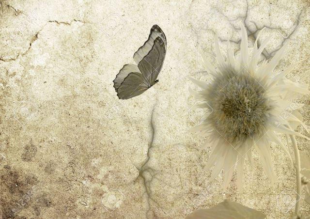 Farfalla-su-girasole pergamena