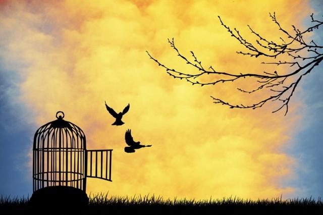 Il lungo volo della libertà