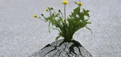 Resilienza e consapevolezza
